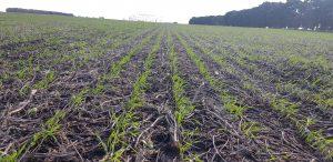 Agricultura: el momento de pensar en negro y en verde