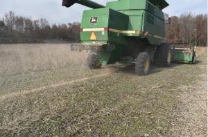 Control de semillas de malezas en cosecha