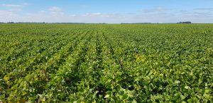 Aquí y Ahora, novedades de cultivos 1 de abril 2021